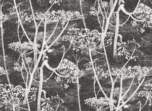 Tapeta Cole and Son Cow Parsley White/Grey